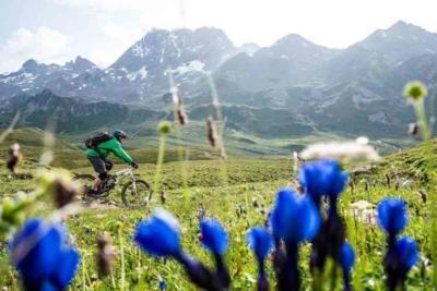 Trails entlang von Bergwiesen